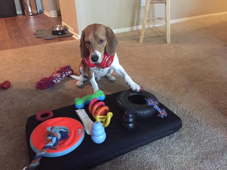 DJ Bean Beagle